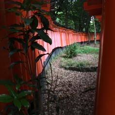 Tori Gates at the Fushimi Inari-taisha Shrine, Kyoto